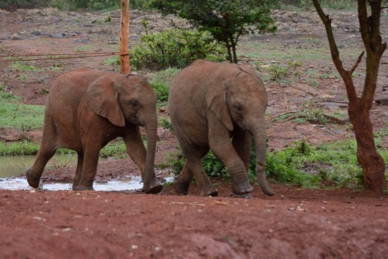 David Sheldrick Wildlife Trust: The babies