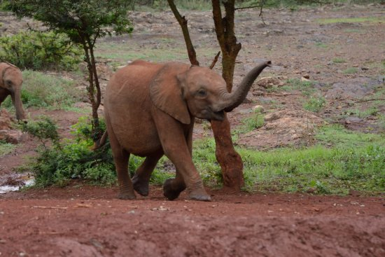 David Sheldrick Wildlife Trust: How, I'm Here