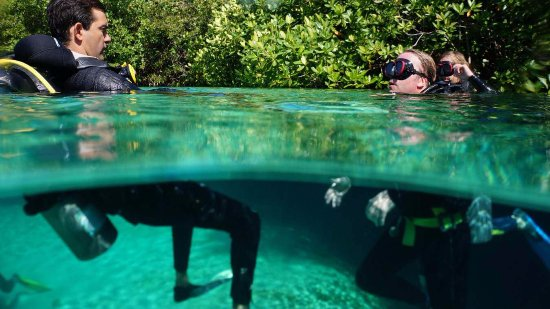 Koox Diving: Immerse yourself and discover the beauty of cenotes
