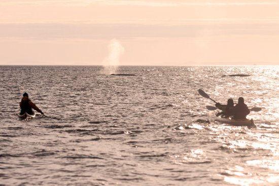 Mer et Monde Ecotours