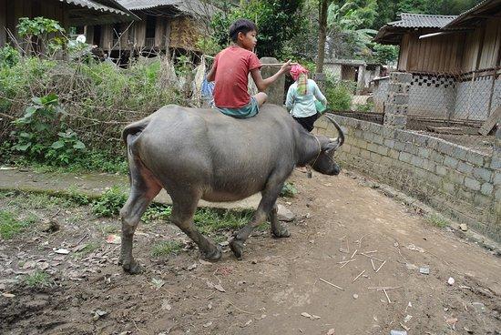 Yen Bai Province, Vietnam: Junge auf Büffel