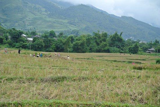 Yen Bai Province, Vietnam: Reisfeld Arbeiter