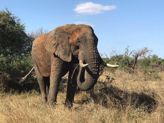 Provincia de Limpopo, Sudáfrica: photo0.jpg
