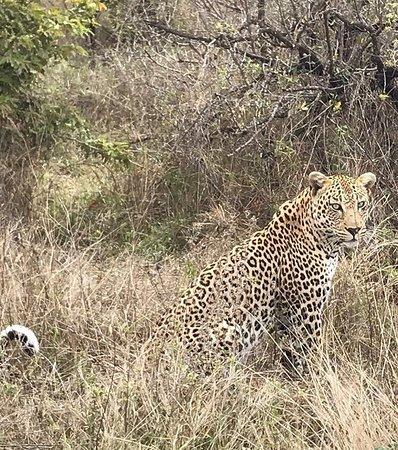 Provincia de Limpopo, Sudáfrica: photo3.jpg