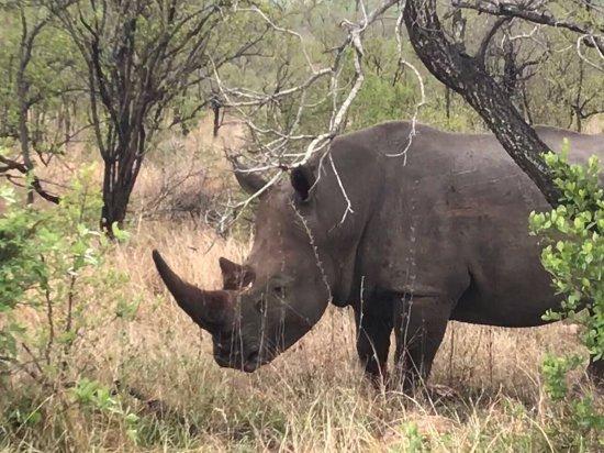 Provincia de Limpopo, Sudáfrica: photo4.jpg