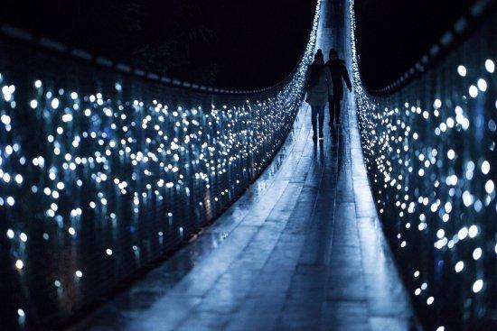 Pont suspendu et parc de Capilano : Canyon Lights at Capilano Suspension Bridge Park