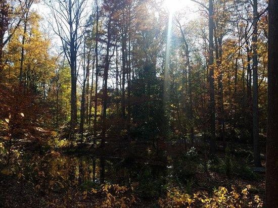 20171124 143314 Picture Of Hatcher Garden Woodland Preserve Spartanburg Tripadvisor