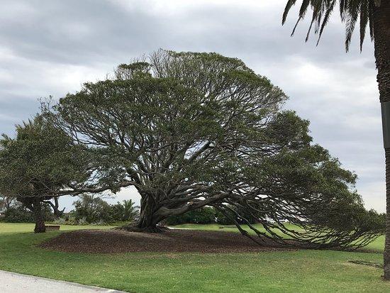 St Kilda, Australien: photo2.jpg