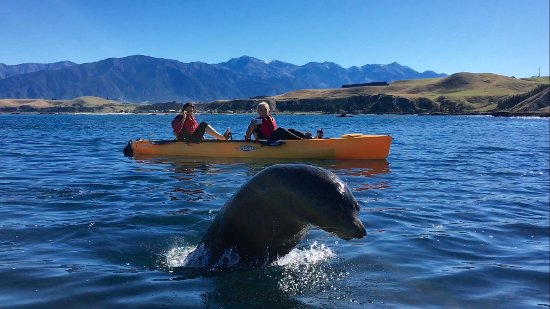 ‪Seal Kayak Kaikoura‬
