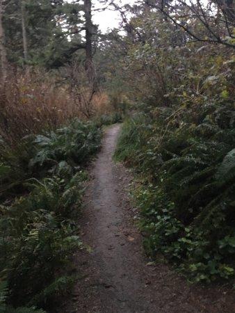 Ilwaco, WA: Trails