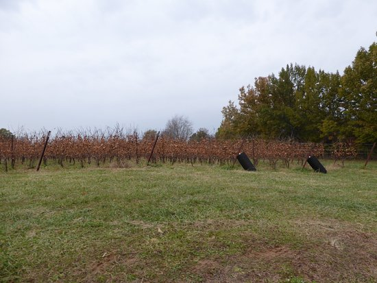 New Market Plains Vineyards