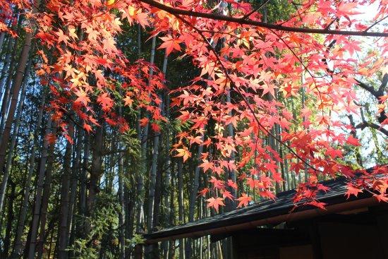 Shokado Garden Art Museum