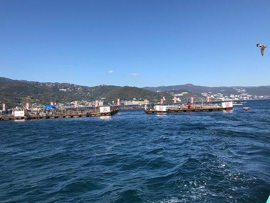 Ajiro Harbour