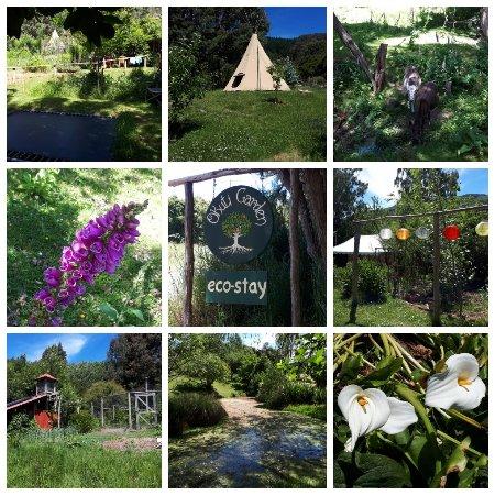 Okuti Garden: SPhotoEditor-20171125_151036_large.jpg