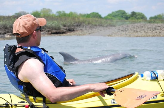 Small-Group Tour: 2-Hour Marsh Kayaking Eco-Tour in Charleston