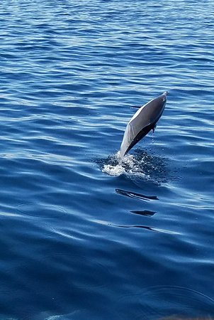 Capt. Dave's Dolphin & Whale Watching Safari: 20171124_183059_large.jpg