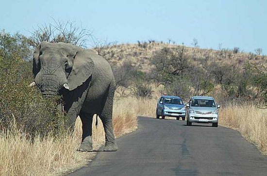 2 Night 3 day Safari to the Big Five...