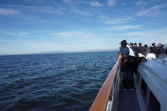 Moss Landing, CA: The best field trip ever!