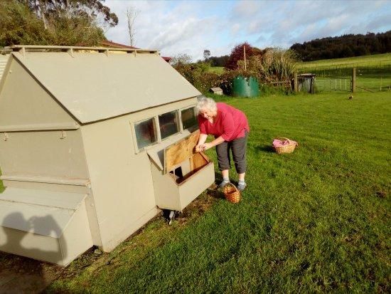 B&B Blossom Cottage: Fresh eggs for breakfast