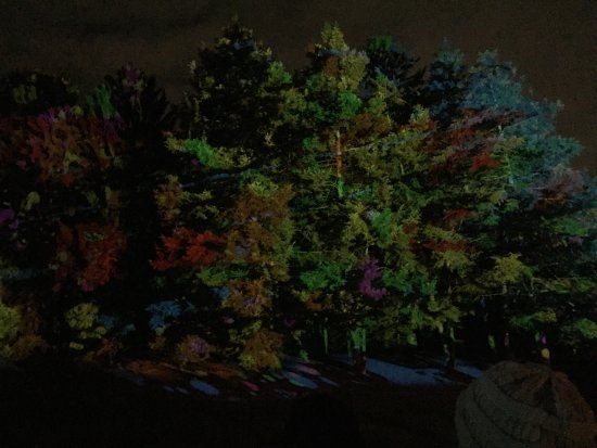 Morton Arboretum: Photos from Illumination. It's gorgeous and there's bonfires to warm up along the way. Tickets a