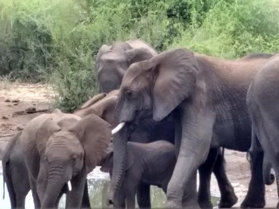 Timbavati Private Nature Reserve, South Africa: Motswari Private Game Reserve