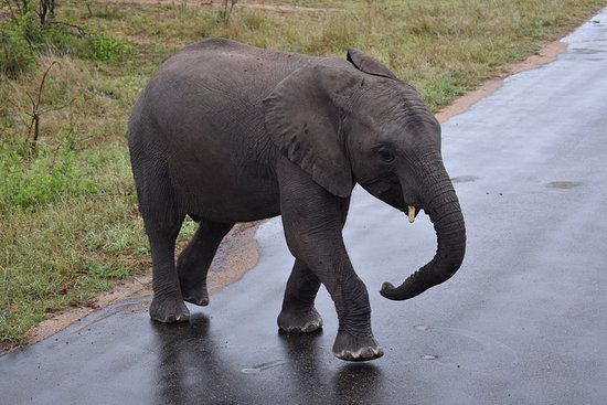 Outlook Safaris: Baby elephant