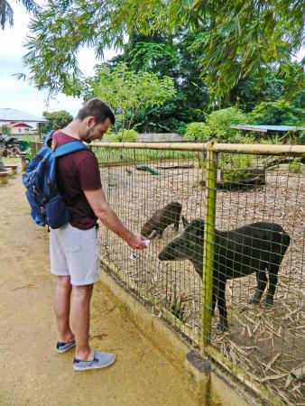 Тапир в Paramaribo Zoo