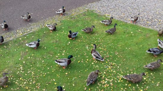 Parkdean Resorts - Tummel Valley Holiday Park: Ducks
