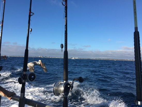 Bar Jack Fishing: photo0.jpg