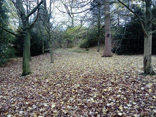 Calke Abbey: Carpet of leaves
