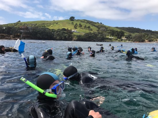 Leigh, New Zealand: School group in water