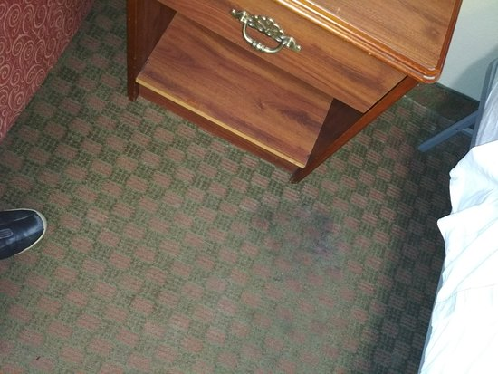 InTown Suites Bowling Green Extended Stay Hotel: carpet stained in several areas
