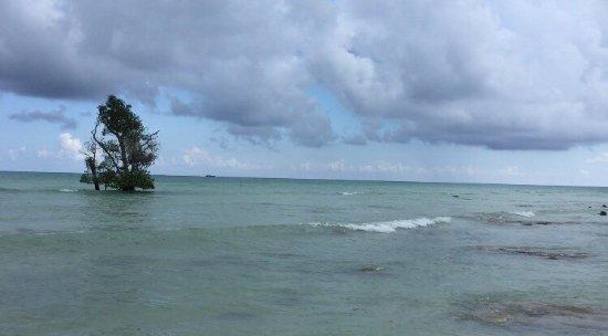 Dolphin Resort: photo1.jpg