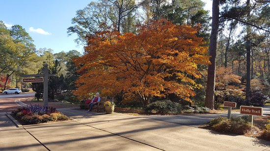 Pine Mountain, Τζόρτζια: Fall Leaves at Callaway Gardens