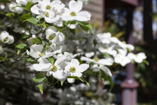 Jacksonville, Oregón: Springtime at Elan!