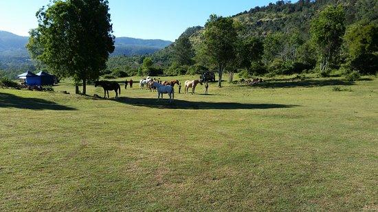 Gatton, Australia: Just horsing around