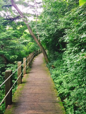 Jeolmul Natural Forest Resort: 휴양림