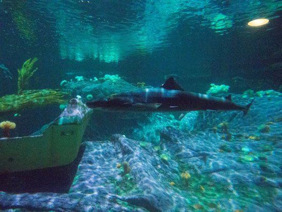 sharks - Picture of Point Defiance Zoo & Aquarium, Tacoma ...