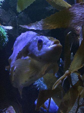 Downtown Aquarium: photo4.jpg