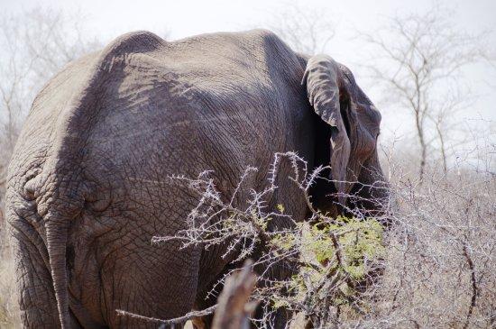 Pungwe Safari Camp Görüntüsü