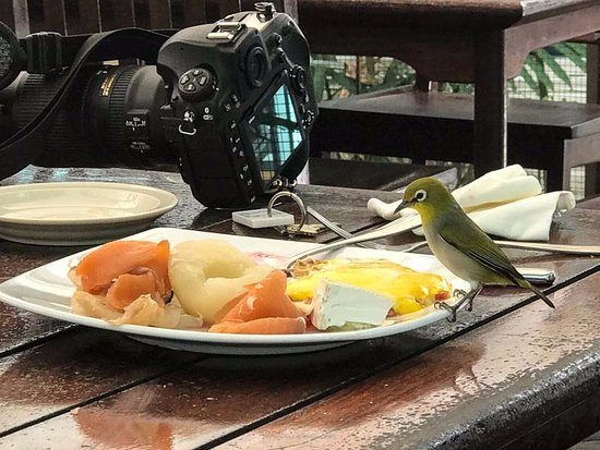 Green Island, Australia: One of the hazards of sharing your breakfast table with local opportunistic wildlife