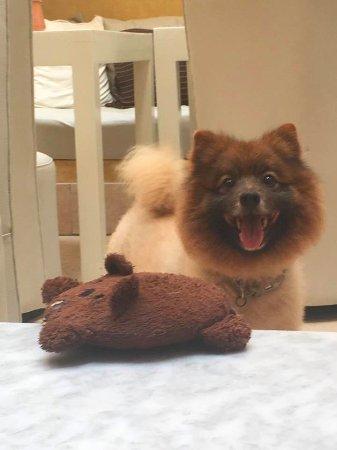 Dar Maya: Eddy, Gareths dog. Not really a ferocious beast but the cutest one you'll find :)