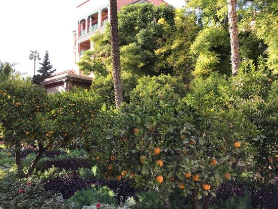 Pause thé dans les magnifiques jardins