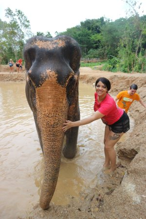 Elephant Retirement Park Phuket: Such an amazing experience