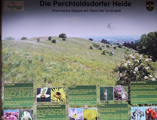Die Perchtoldsdorfer Heide eine artenreiche Steppe am Rand von Wien