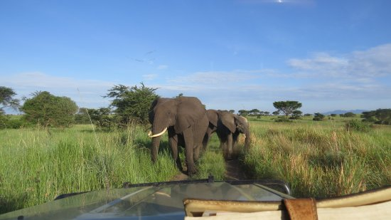 Entebbe, Uganda: elephants in Queen Elizabeth National park.