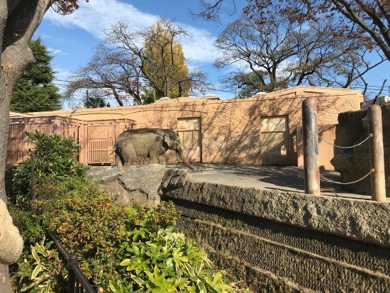 Kamine Park: photo1.jpg