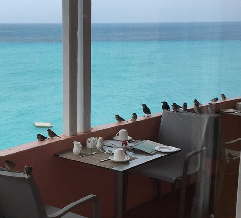 Pompano Beach Club: Beautiful view but the birds descend at breakfast