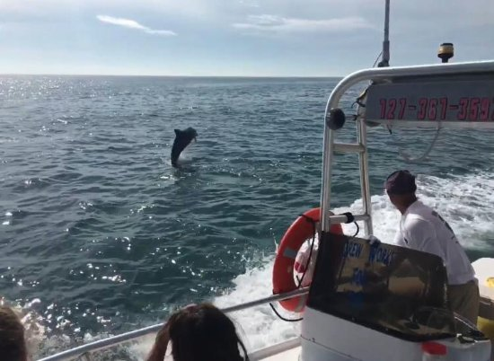 Treasure Island, FL: Dolphin Friends!
