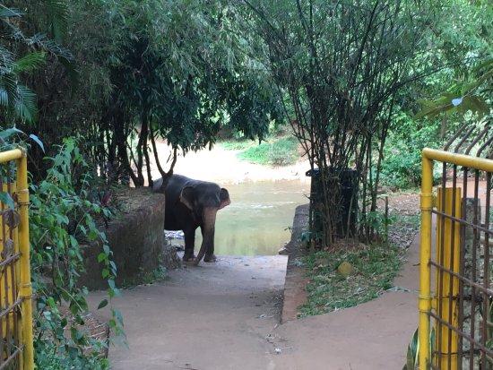 Bhagwan Mahavir Wildlife Sanctuary: photo4.jpg